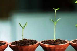 Growing your small business? 5 free sites to help your Google rankings